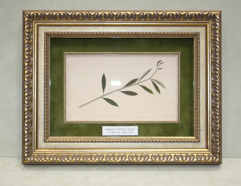 Оливковая ветвь в коробочке из багета с деревянным слипом и бархатным паспарту в пластиковом багете